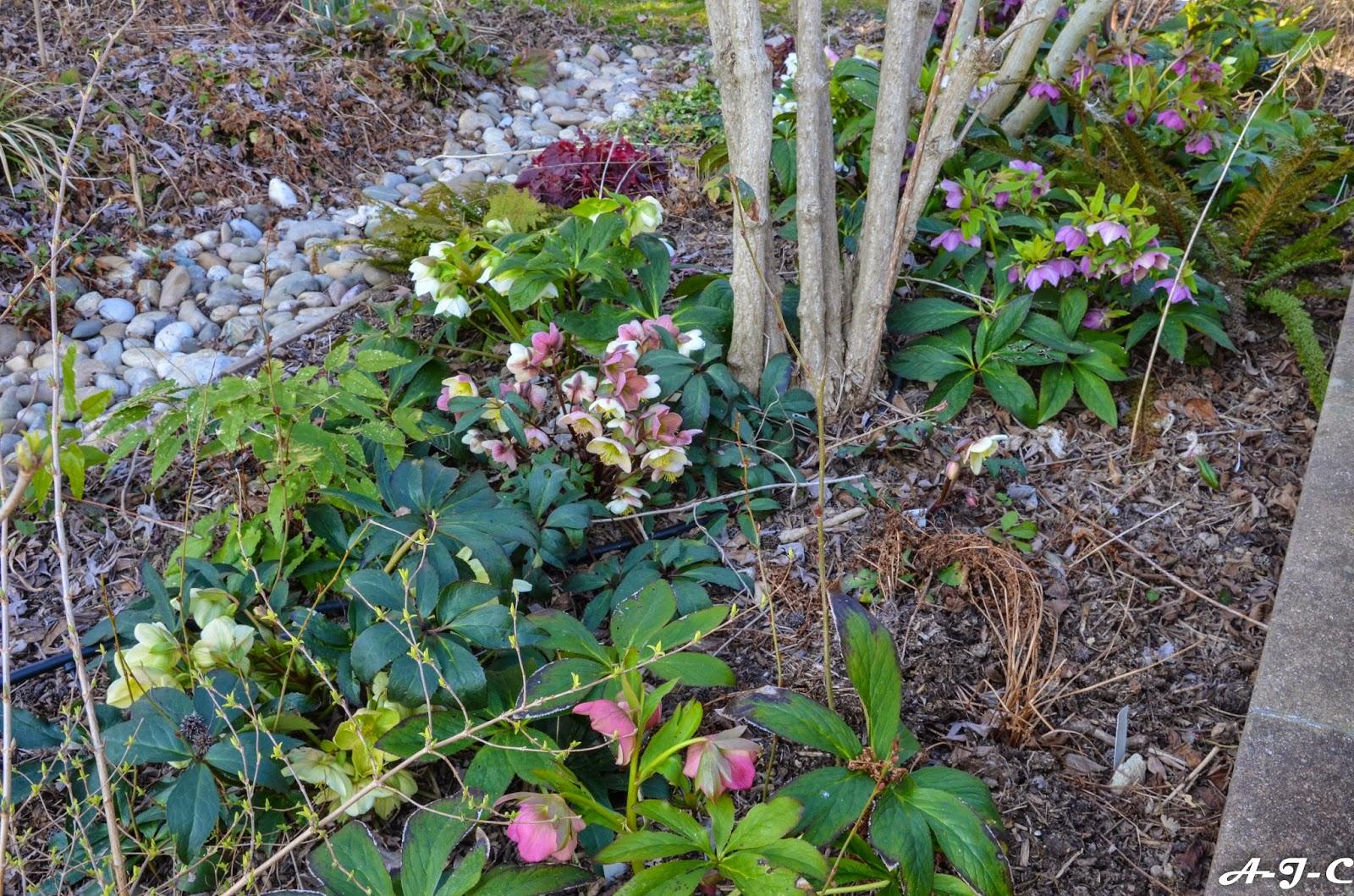 Le jardin de daphn e mars 2015 for Jardin mars 2015