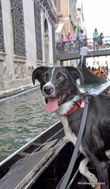Ralph the Dog on Gondola in Venice