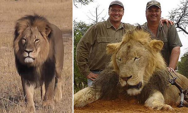 Walter J Palmer o assassino de Cecil agora é a caça!