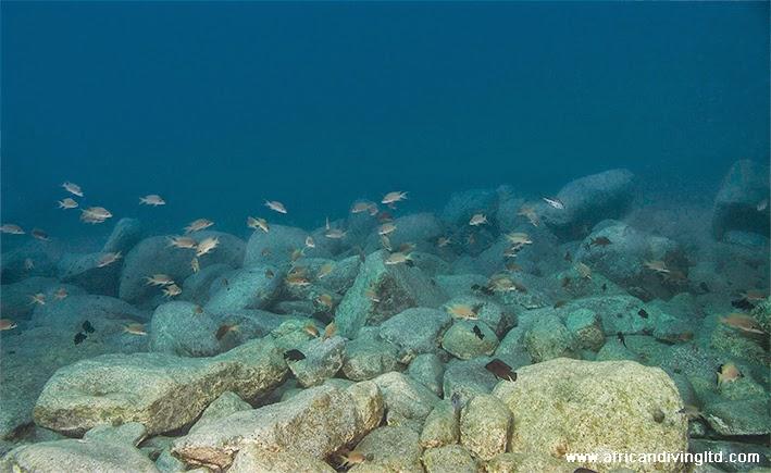 biotope_mikongolo_island.jpg