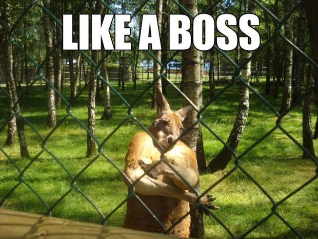 Funny Like A Boss Meme : The bosses has arise for fum and interesting articles