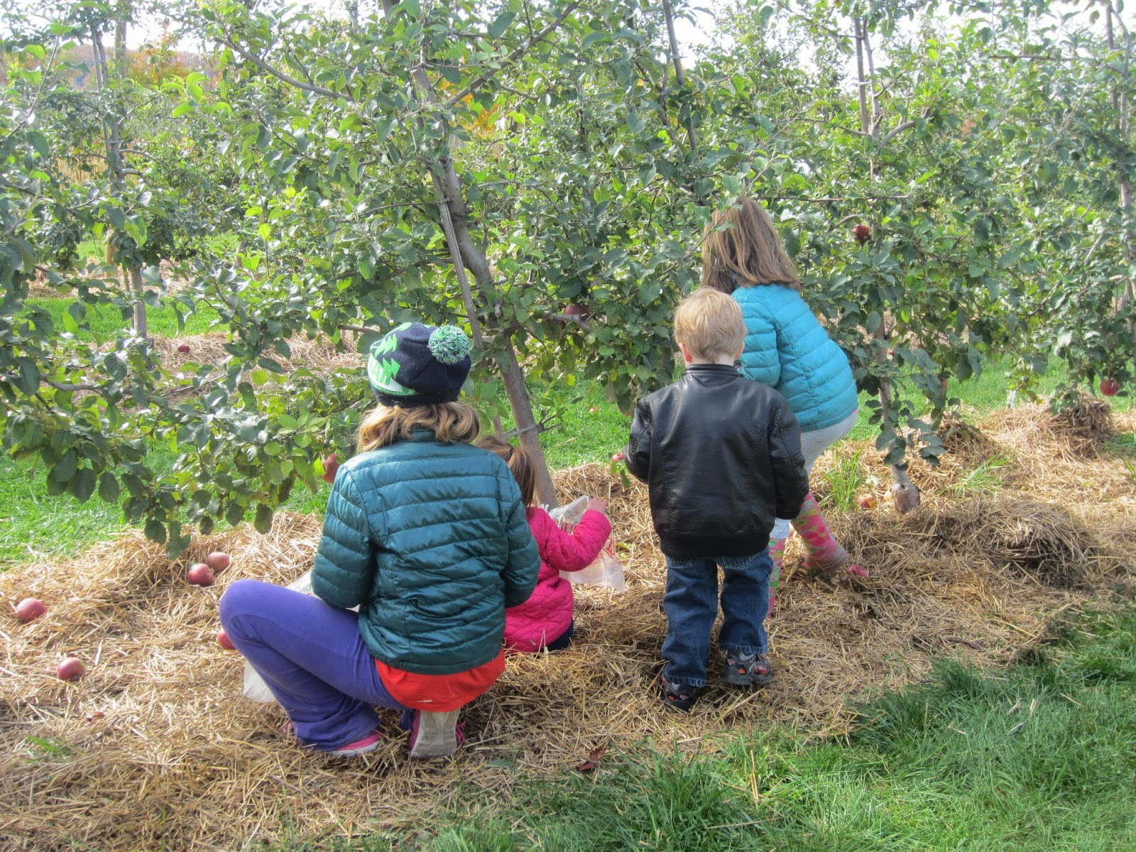 Chudleigh's Farm Apple Picking
