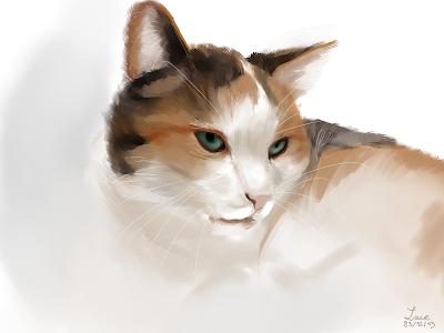 dessin lace chat wacom