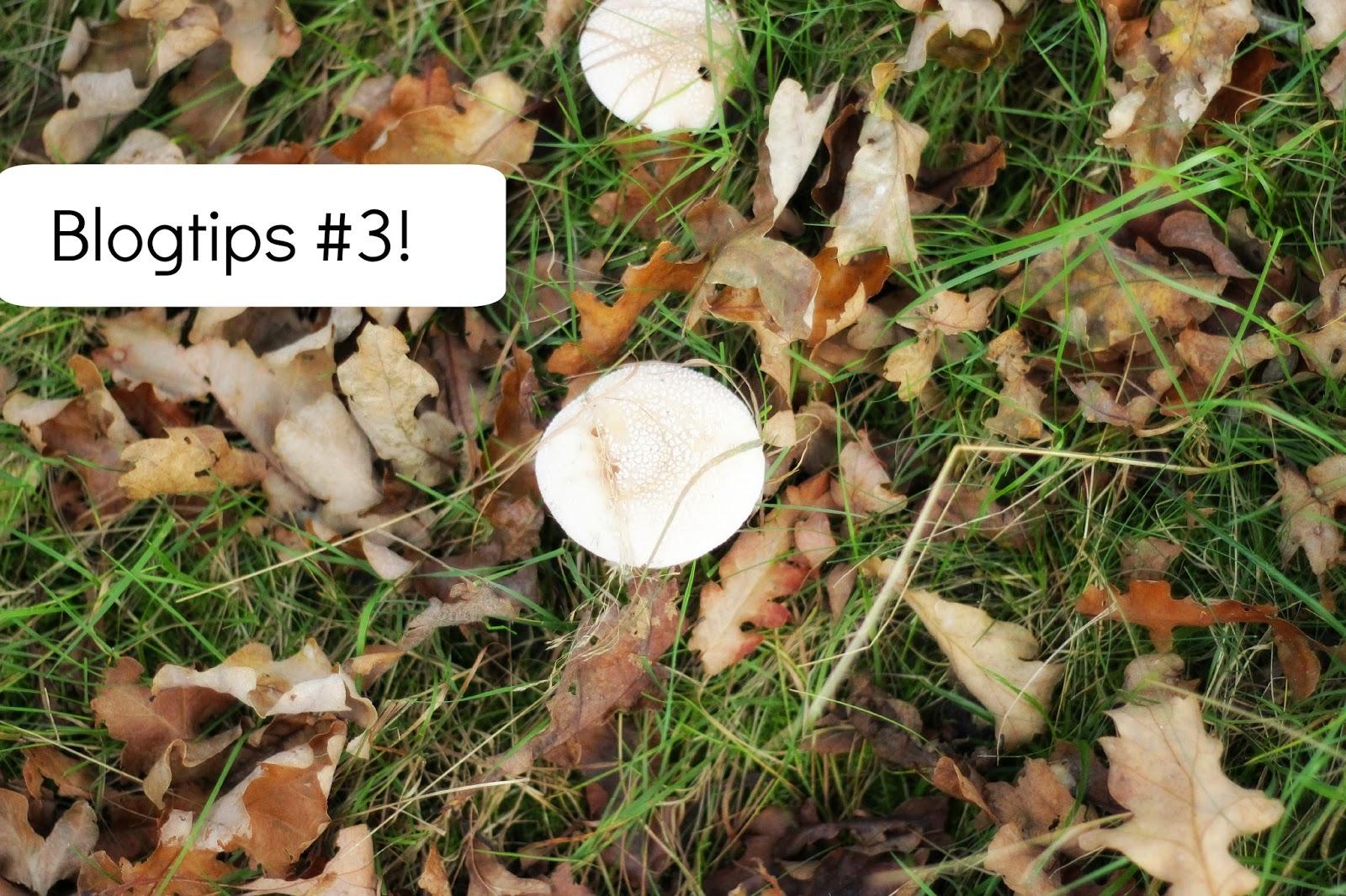tips bloggen