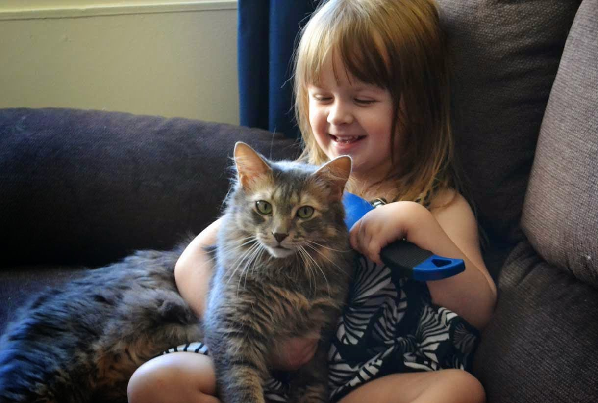 Smiling Child with Cats Love