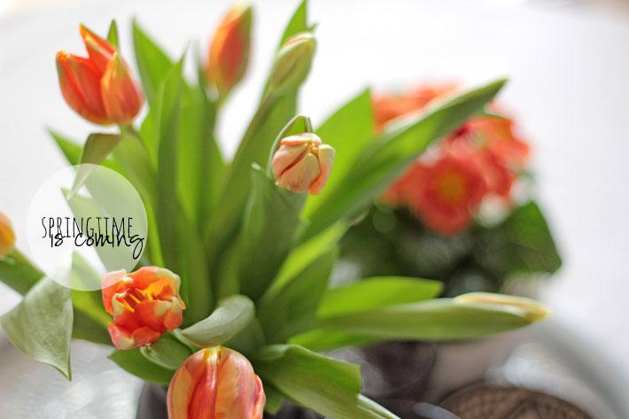 Amalie loves Denmark Der Frühling kommt