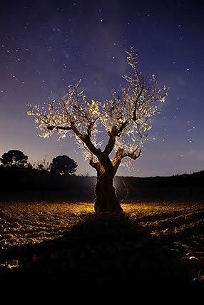 Cualidades de la luz en la noche