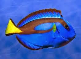 Jenis Ikan Hias | Jenis Ikan Hias yang Paling Bagus untuk Dipelihara