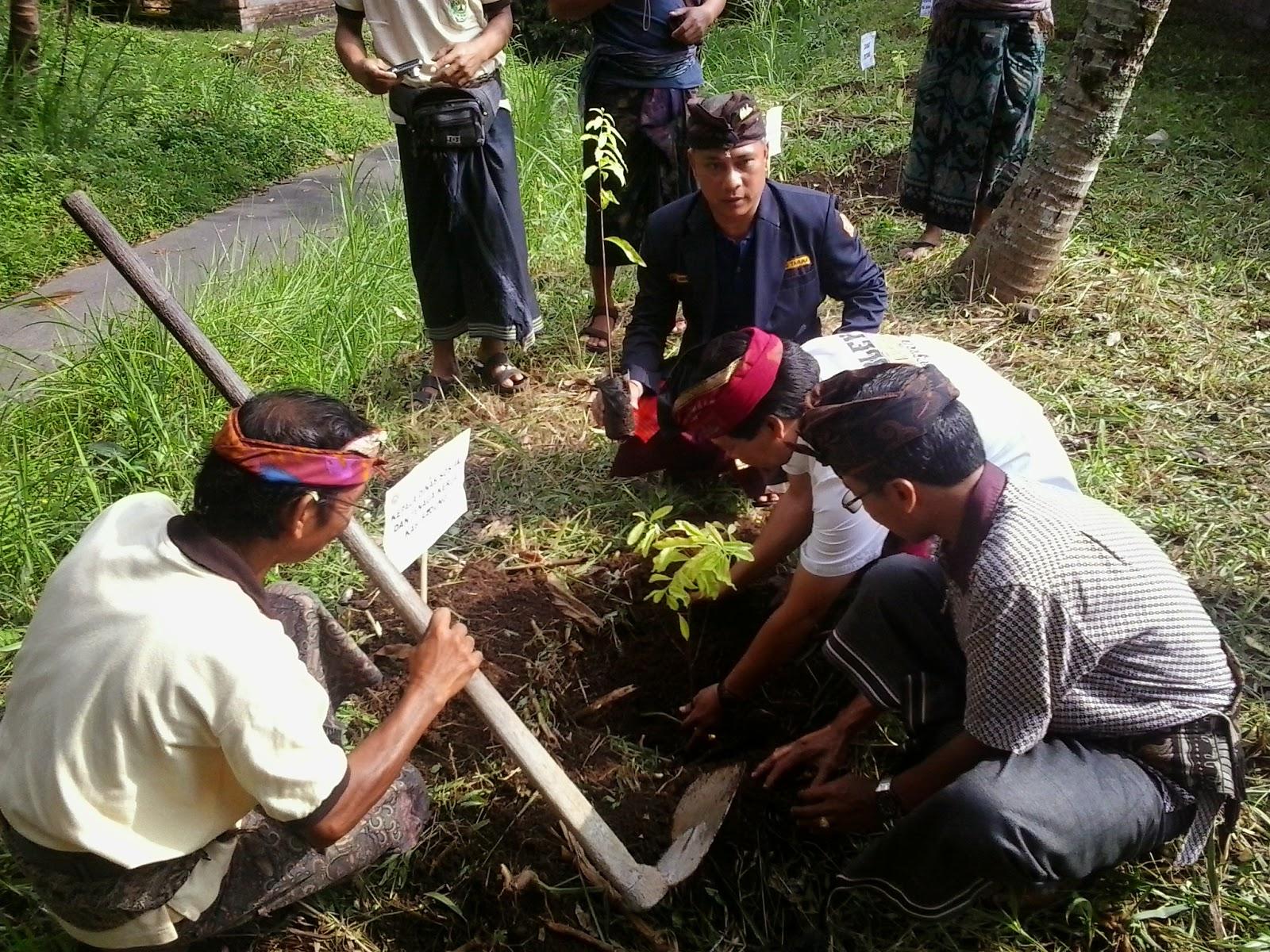 Kabid Binsos Disosnaker Kab. Badung sedang menanam pohon didampingi Ketua Karang Taruna Kab. Badung dan PSM Desa Pangsan