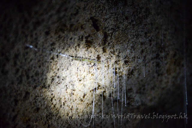 Waitomo Caves, 螢火蟲, glowworm, rotorua, 羅托魯亞