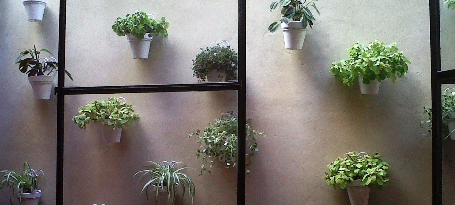 Anikaflor junio 2011 - Plantas de interior colgantes ...