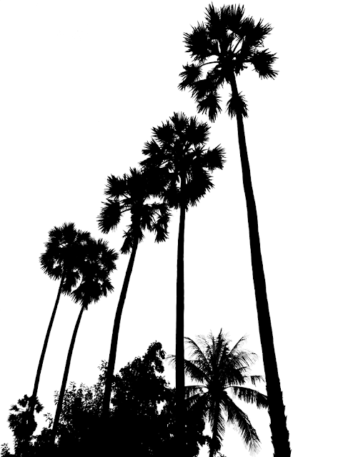 black and white silhouette of palm trees