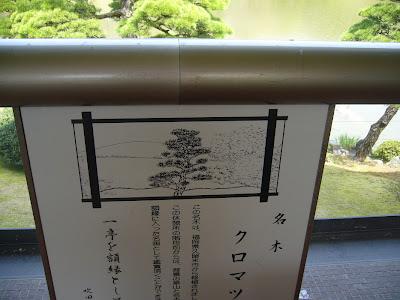 万博公園・日本庭園・名木クロマツ