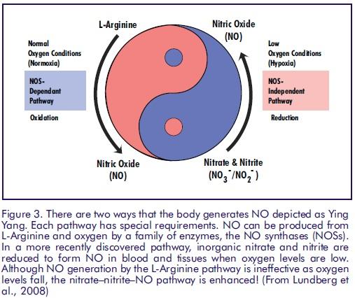 Источники оксида азота: аргинин и цитруллин.
