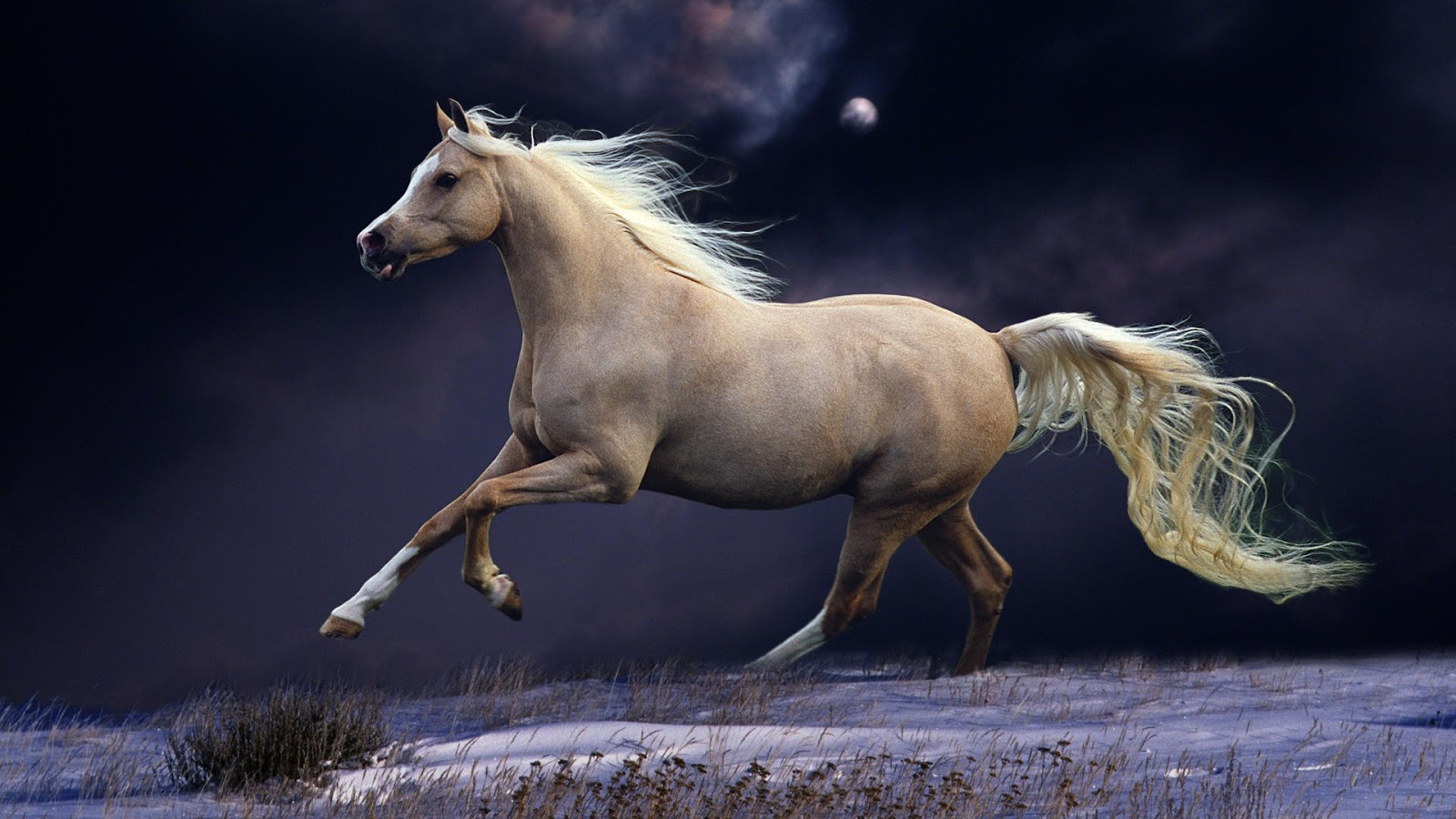 Must see   Wallpaper Horse Stunning - 12  Collection_465140.jpg