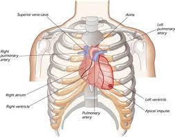 pengobatan tradisional penyakit jantung yang mujarab