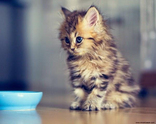Photo chaton 1 mois très mignon
