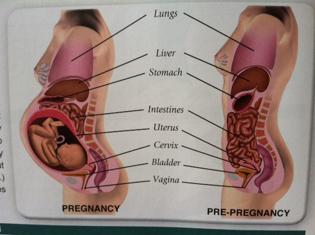 Squishy Lump Below Breasts And Above Uterus The Bump