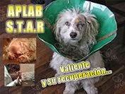 Rehabilitación APLAB