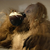 Coffee and Science Keeps Bigfoot Research Alive