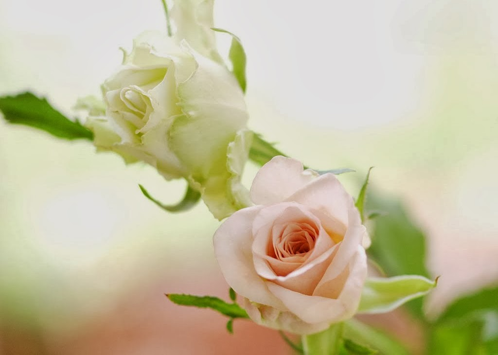 White Rose Bouquet Wallpaper White Rose Bouquet Wallpapers