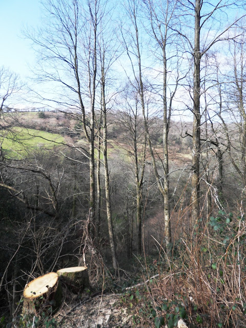 Kings Wood, Pentwewan, St.Austell