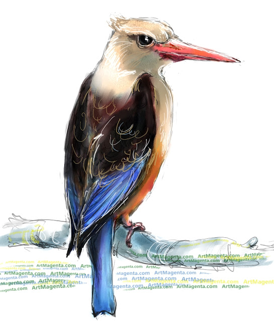 Grey-headed kingfisher sketch painting. Bird art drawing by illustrator Artmagenta
