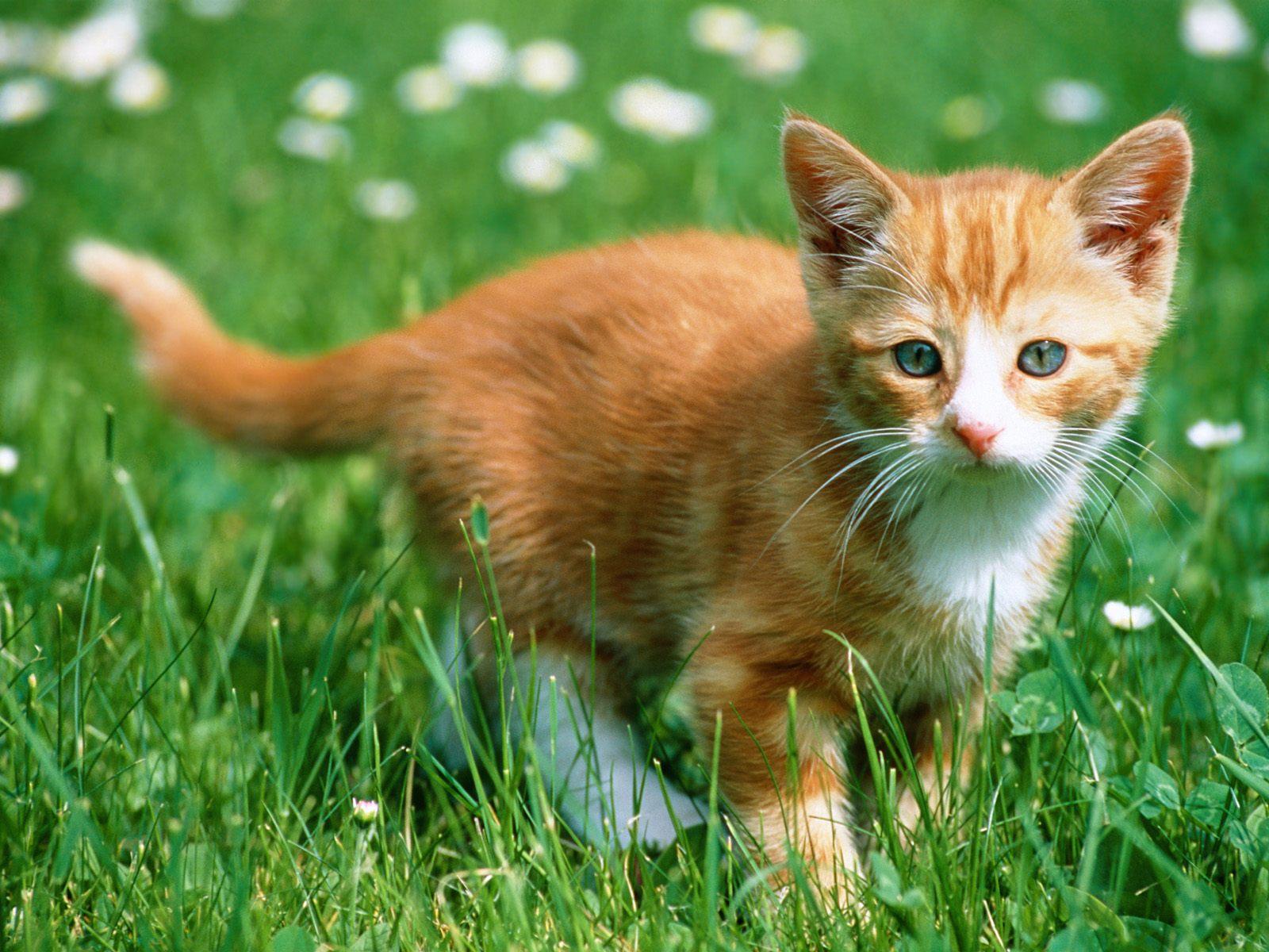 Wallpaper Kucing Lucu