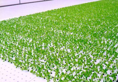 growing plants without soil ccres aquaponics ccres. Black Bedroom Furniture Sets. Home Design Ideas