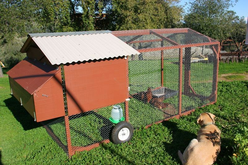 Sunny slope orchard our mobile chicken coop for Portable chicken coop on wheels