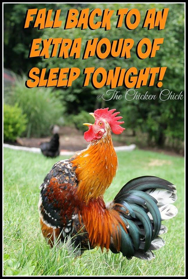 Fall back to an extra hour of sleep tonight! #daylightsavingstime