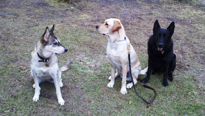 Picture of Toby (in middle) with some of his new family (2 of their dogs