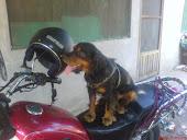 Mi querida mascota