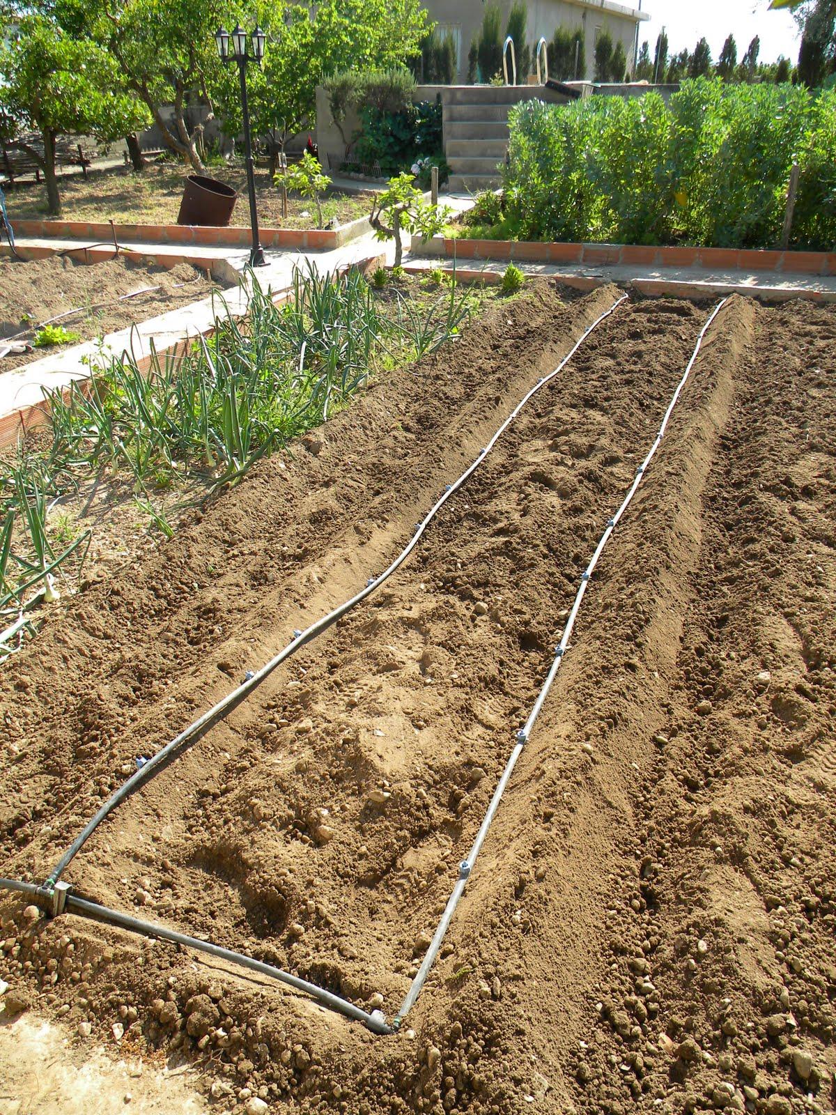 El huerto de tatay primera barraca de tomates for Riego por goteo pistachos