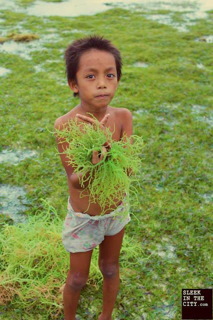 camiguin mantigue island guso agar-agar harvest