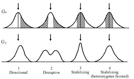 Natural Selection Mode Increase Variation