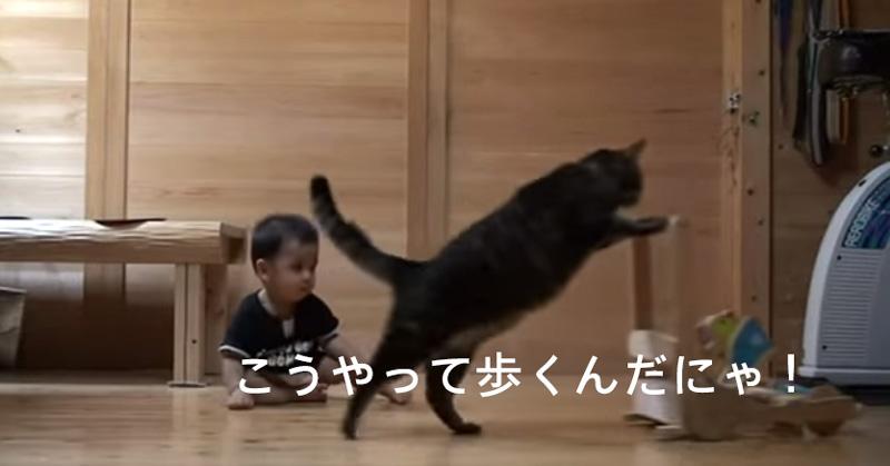 人間の赤ちゃんに歩き方を教えるネコの動画