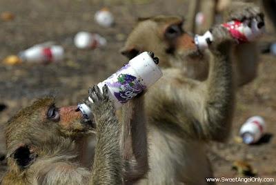 funny_picture_funny_monkeys_drinking_cold_drink_vandanasanju.blogspot.com