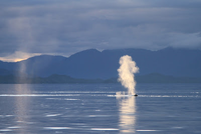 Whale Blow in the Morning Near Alexander Island