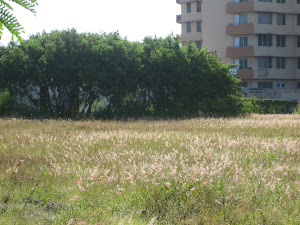 SEASONAL URBAN PRAIRIE