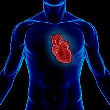 rahasia organ manusia