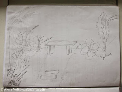 Аленин сад, часть 2, план участка, рисуем сад, схема сада, огорода