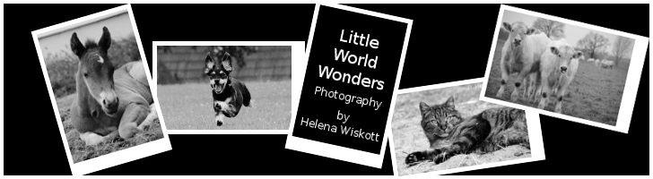 Little World Wonders