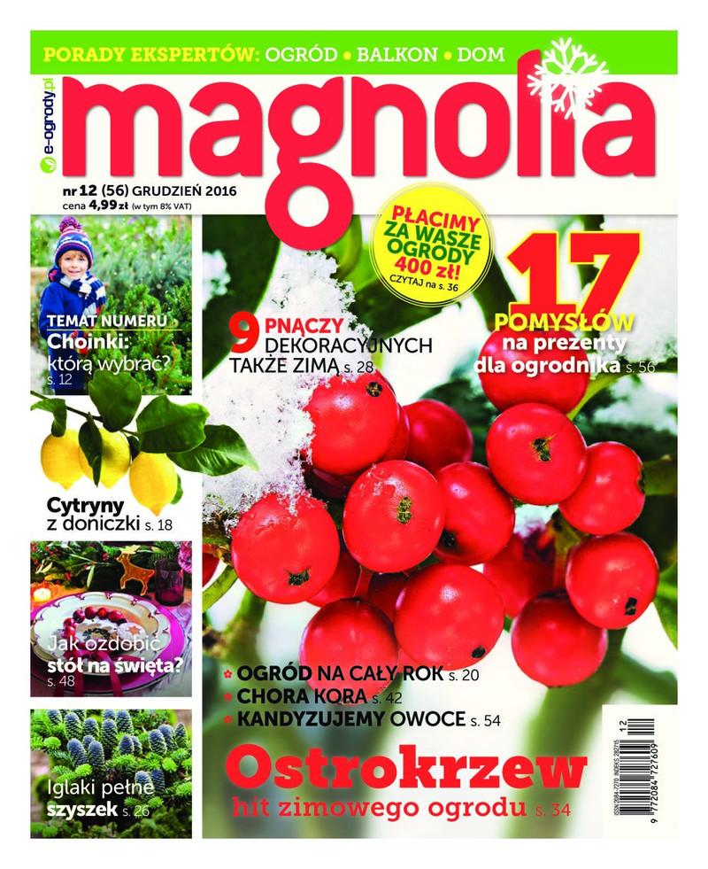 Magnolia Nr12 (56)  GRUDZIEŃ