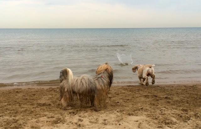 Montrose dog beach