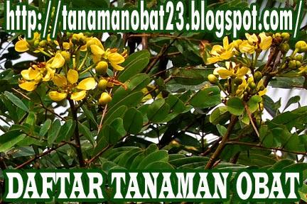 Tanaman Obat Johar (Cassia siamea Lamk,)