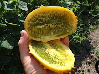 Organic exotic fruit, horned melon