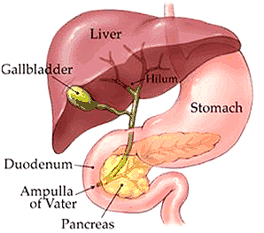 The Signs and Symptoms of Gallbladder Attack