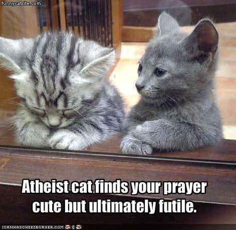[Image: atheist+kitty.jpg]