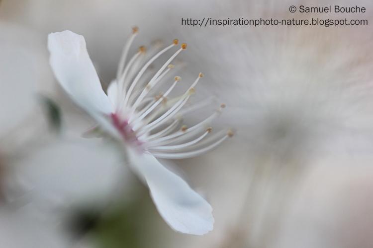 fleur blanche printemps